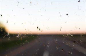Insekten-Windschautzscheibe